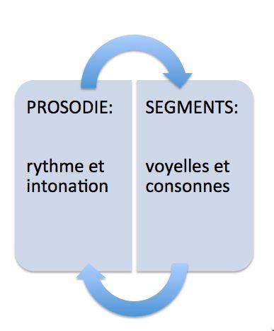 la matière phonique se compose de la prosodie -rythme et intonaiton- et des segments -voyelles et consonnes-.