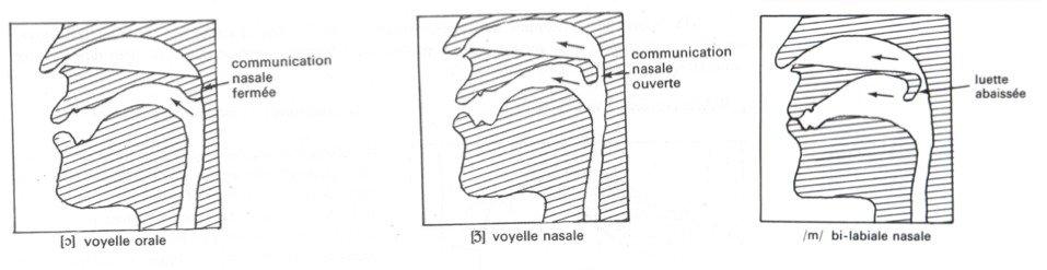 Productions nasales. Source: J. Mazel Phonétique et phonologie dans l'enseignement du français Paris, Nathan, 1980