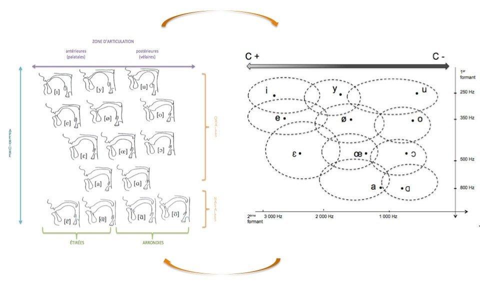 Voyelles: corrélations physiologico-acoustiques