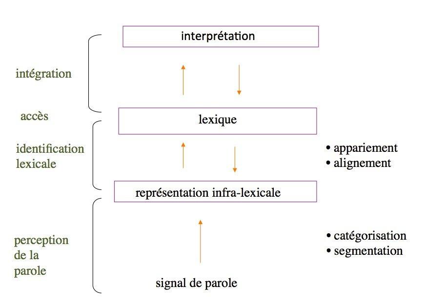 Un modèle généraliste de la perception de la parole