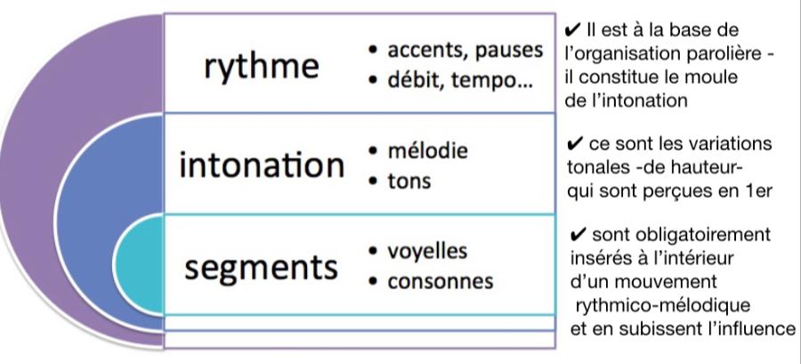 L'organisation de la matière sonore d'une langue